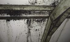 Reinigen van afdichtingen, muren, enz. in voedselfabrieken
